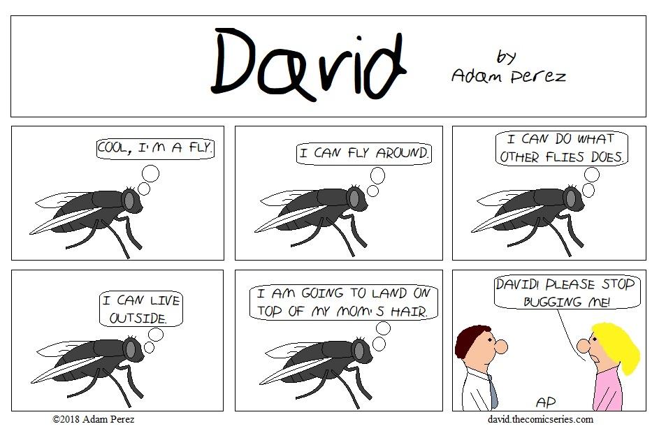 David the Fly